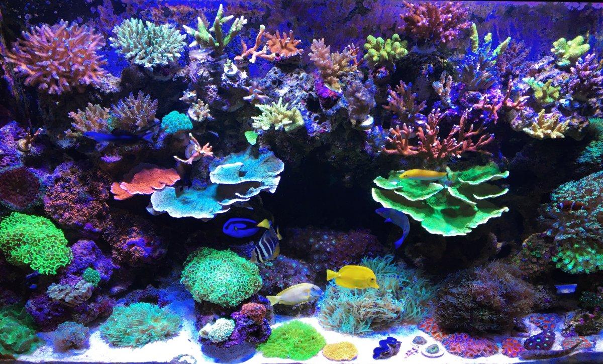 Marine-Hard-and-Soft-Corals1-2.jpg